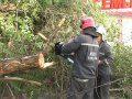 10-метровое дерево перегородило проезжую часть в центре города. Сотрудники МЧС быстро отреагировали