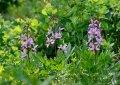 В Крыму зацвел смертельно опасный цветок