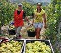 Виноградарство по мировым канонам